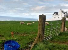 Irish pastoral beauty