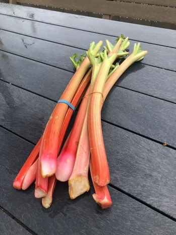 Fresh Rhubarb!